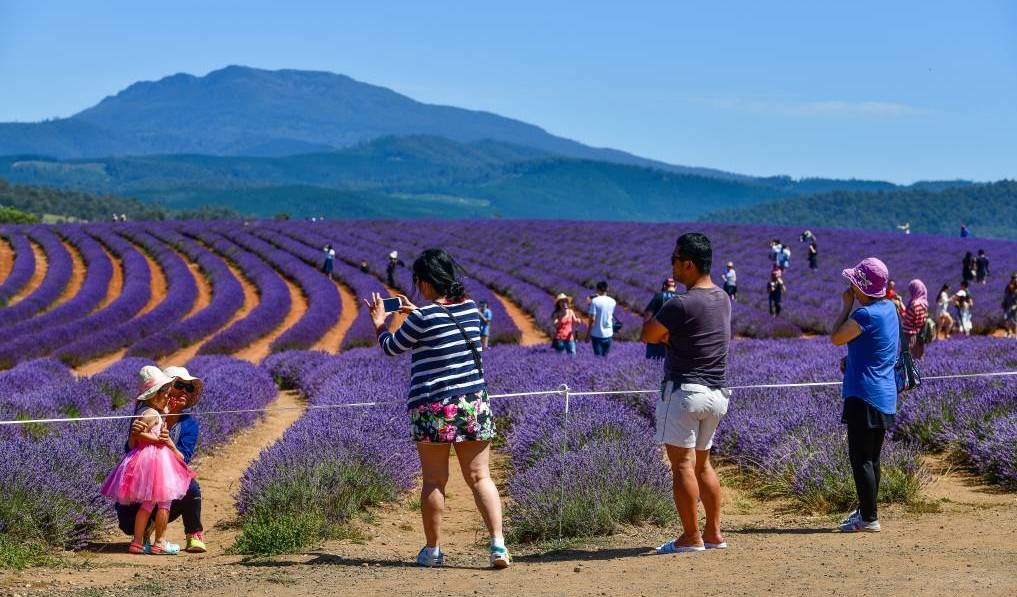 Robert Ravens, of Bridestowe Lavender Estate (pictured), is among a number of prominent figures in the Tasmanian tourism industry to call for the federal government to extend its JobKeeper wage subsidy payment for the sector.