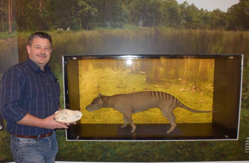 EXTINCT: QVMAG natural sciences curator David Maynard believes that museums are the only place anyone will see a Thylacine ever again. Picture: Stefan Boscia