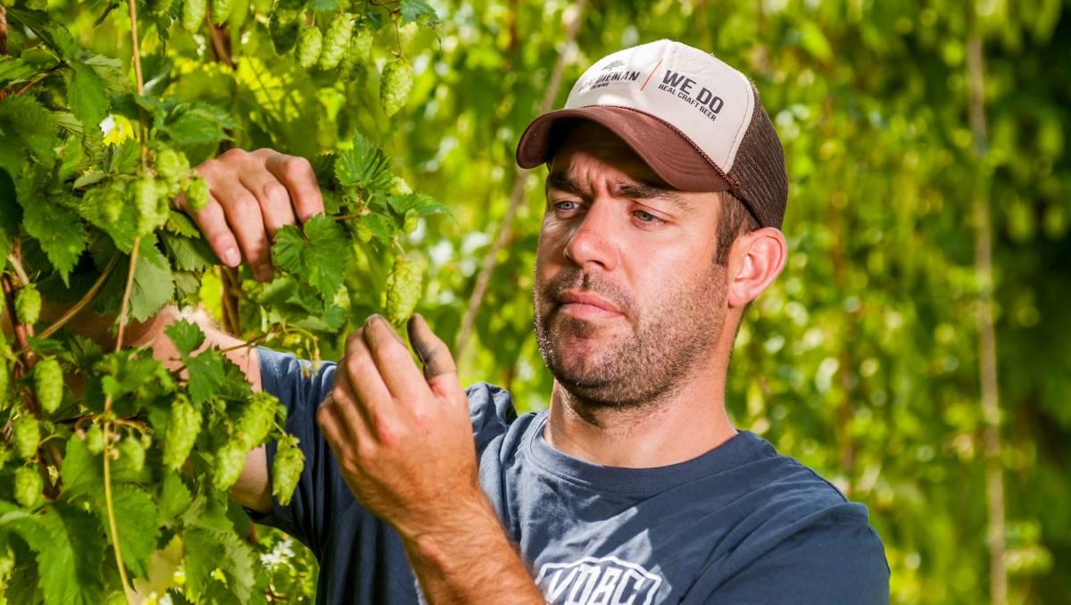 Tasmanian beer brewers 'hops' to it for 2018 harvest