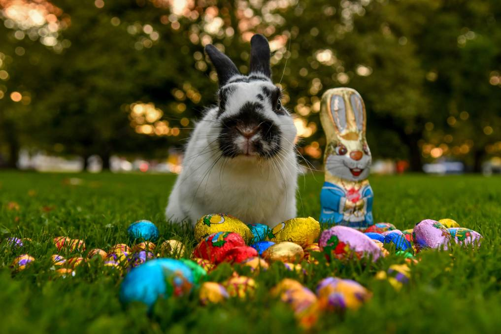 What's On: Easter Edition