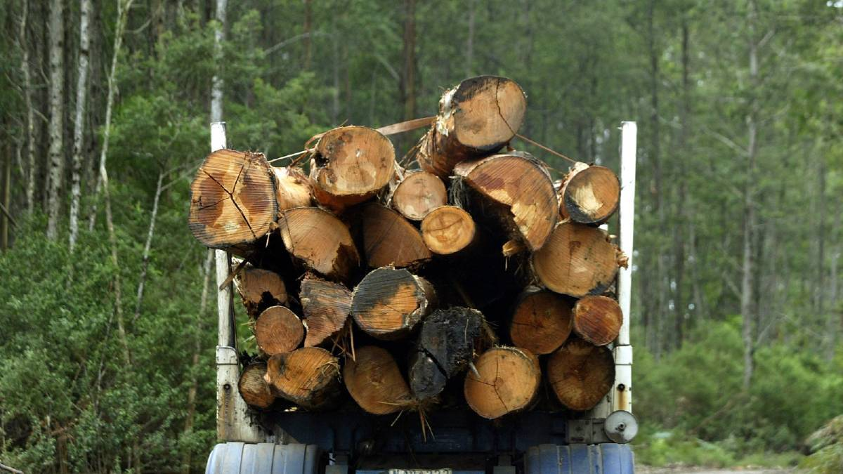 Greens call for forestry 'rethink'